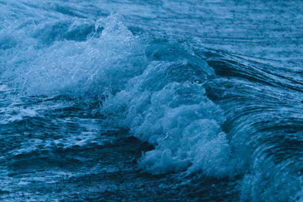 荒波を泳ぐ夢