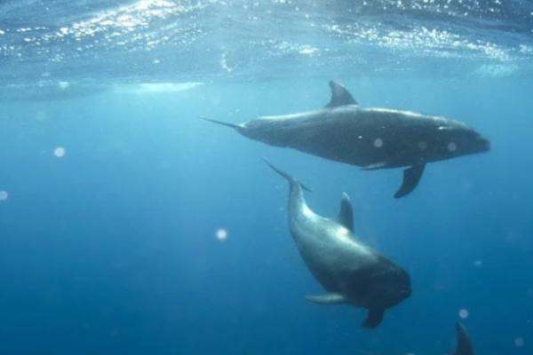 海でイルカが泳ぐ夢