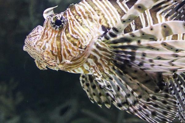 海で見た魚が印象的な夢