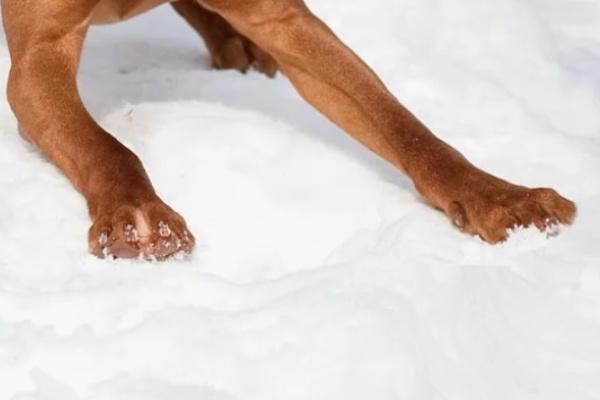 雪の中を犬が駆け回る夢