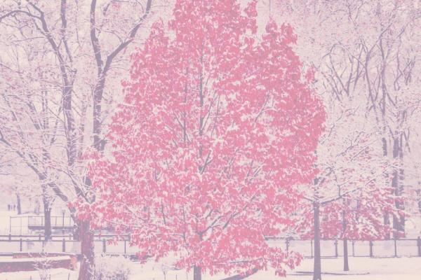 赤い雪・ピンクの雪・紫の雪が降る夢